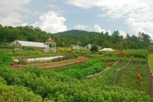 Garden Apprentice Program